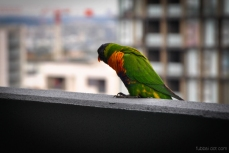 Birds wm-1