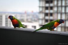 Birds wm-2