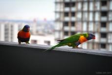 Birds wm-3