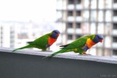 Birds wm-4