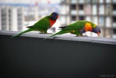 Birds wm-5