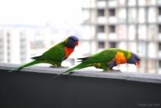 Birds wm-6