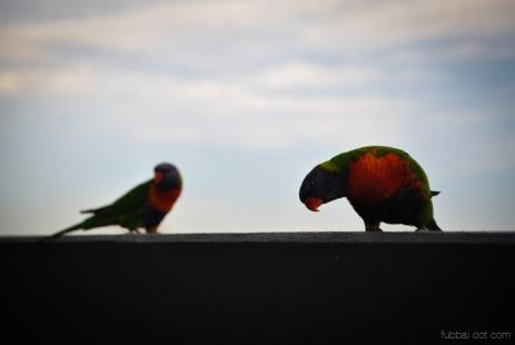 Birds wm-7