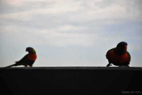 Birds wm-8