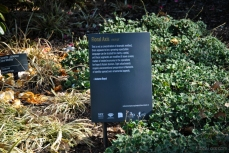 An excerpt from 'Floral Axis' by Autumn Royal in the Royal Botanic Gardens Victoria