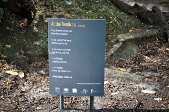 An excerpt from 'At the Tandicals' by poet Chris Wallace Crabbe AM in the Royal Botanic Gardens Victoria