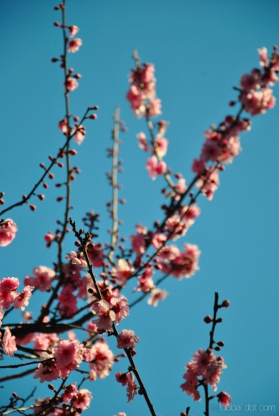cherryblossom-bees-wm-12