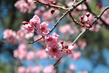 cherryblossom-bees-wm-19