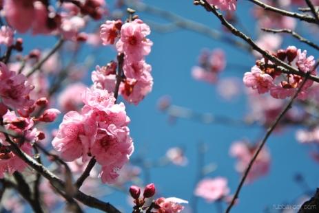 cherryblossom-bees-wm-20